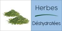 Darégal - Industrie - Herbes déshydratées